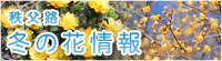 秩父路冬の花情報