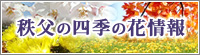 秩父の四季の花情報